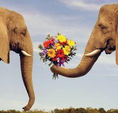 象さんが長~い鼻で花束を...