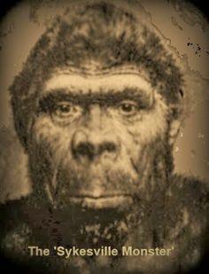 Frontiers of Zoology: The Sykesville Monster, Early Man Bigfoot. Ufo, Bigfoot Photos, Bigfoot Sightings, Bigfoot Sasquatch, Bigfoot News, Carroll County, Phantom, Mothman, Urban Legends