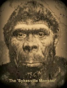 1000+ images about Bigfoot? I say Yes! on Pinterest ...