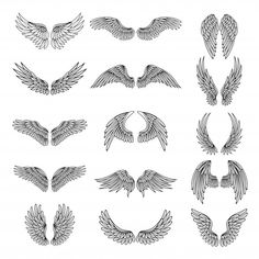 Monochrome illustrations set of different stylized wings for logos or.Monochrome illustrations Set of different stylized wings for logos or label design projects. Vector picture set Royalty free monochrome illustrations Set of different stylized w Wolf Tattoos, Body Art Tattoos, Tattoo Drawings, Angel Wing Tattoos, Celtic Tattoos, Sleeve Tattoos, Angel Wings Drawing, Animal Tattoos, Tatoos