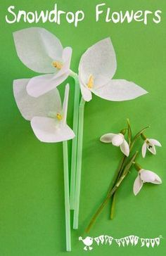 Snowdrop tissue paper flowers a simple winter craft and flower craft for kids.