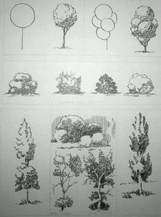In this article, we will be taking you through how to draw a tree step by step image guides, which is one of nature's bounties that inspires so many. Befor to drawing a tree How To Draw A Tree (Step By Step Image Guides) Plant Sketches, Tree Sketches, Drawing Sketches, Pencil Drawings, Art Drawings, Landscape Architecture Drawing, Landscape Sketch, Landscape Drawings, Sketch Architecture