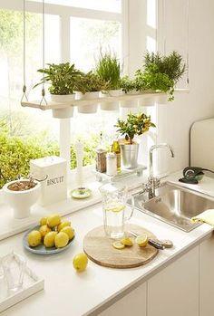 Una estantería colgante con plantas aromáticas, perfecta para cultivar hierbas…