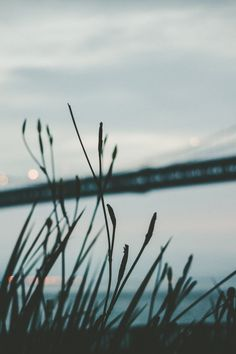 Free stock photo of bridge, silhouette, grass, architecture