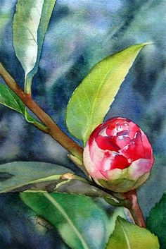 Colleen Sanchez: watercolor.   This pinner has a camelia bush with leaves/bud that looks so much like this watercolor. Amazing talent!