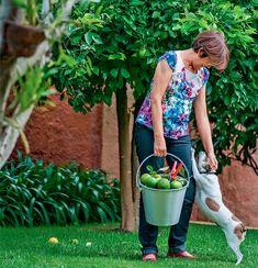 05-quintal-vira-refugio-com-arvores-frutiferas-fonte-e-churrasqueira