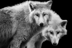 Wolf Ademeit: Animal photography (Germany)
