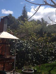BBQuing at Home. Boadilla del Monte. Madrid