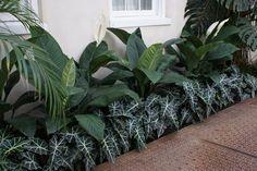 Side Yard Landscaping, Landscaping Plants, Landscaping Ideas, Backyard Ideas, Garden Ideas, Mini Plants, Indoor Plants, Alocasia Plant, Rooftop Terrace Design