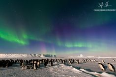 .antarctica.