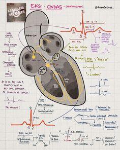 La Chuleta de Osler: Cardiología - Electrocardiograma: Ondas y generalidades.