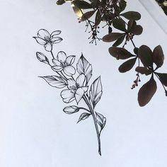 Carolina jasmine again! Unique Tattoos, Cute Tattoos, Body Art Tattoos, Small Tattoos, Sleeve Tattoos, Tattoo Sketches, Tattoo Drawings, Gladiolus Flower Tattoos, Jasmine Tattoo