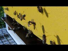 Loodusgiid: Mesilaste päev 20.05.2021