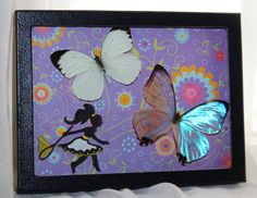 Real Morpho Butterfly Display in 5 x 7 Riker Mount by Athenianaire