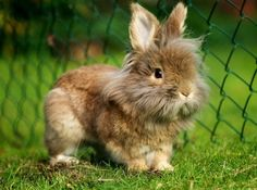 bunnies   umm. please?   so sweet   Pinterest