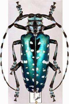 Descubre TU MUNDO: Los 9 insectos coloridos más fascinantes (galería)