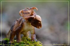 Our new Pachyrhinosaurus stands proud atop his mountain of green vegetation in this great fan photo by Marc D posted on our Facebook wall.