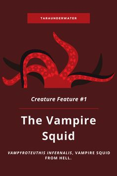 The vampire squid is a living fossil found in the deep ocean. With the name vampire squid, this creature is NOT what you imagine. Learn about the vampire squid on my blog. vampire squid  marine biology  marine biologist  education  conservation  creature feature  taraunderwater Vampire Squid, Living Fossil, Biologist, Marine Biology, Creature Feature, Conservation, About Me Blog, Creatures, Ocean