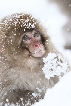 Animals in snow (25)