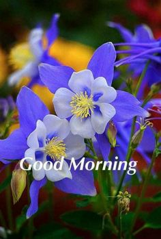 Good Morning Flowers Quotes, Good Morning Roses, Good Morning Beautiful Quotes, Good Morning Cards, Good Morning Picture, Good Morning Friends, Good Morning Good Night, Morning Pictures, Good Morning Massage