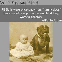 Nanny puppy