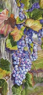 Watercolor painting of grape clusters by Lisa Hill