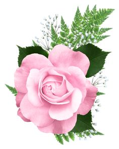 Pink Rose PNG Transparent Picture