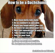 View from the Birdhouse: Dear Abby: How to Be a Dachshund. It's true. I don't quite understand it but my Dachshunds have all been exactly like this. Dachshund Funny, Mini Dachshund, Dachshund Puppies, Funny Dogs, Cute Puppies, Cute Dogs, Daschund, Dapple Dachshund, Dachshund Quotes