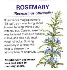 Use Rosemary for clearing energy in your home as well. Elf leaf <3 #RekindleYourLight http://twintreetv.kajabi.com/sp/34411-rekindle-your-light