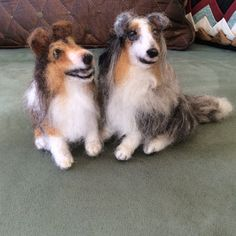 Duncan and Rumor, two Shelties by Linda Wenger