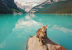 Suki, um lindo gato de bengala que vive no Canadá, gosta de uma aventura. Junto com seus tutores, ele está sempre com o pé na estrada explorando as lindas e grandiosas paisagens do seu país. Sua coloração, que parece uma pintura de tão perfeita, contrasta com os lugares onde passa, criando belas fotografias para guardar de recordação no álbum de viagem da família - e na conta de Suki no Instagram também, que tem feito o maior sucesso na internet. No Instagram, chamado de Suki The Cat, há…