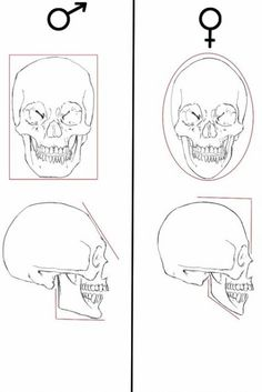 Anatomy Drawing Tutorial male and female skull differences by olgatarta - Human Figure Drawing, Figure Drawing Reference, Guy Drawing, Anatomy Reference, Anatomy Sketches, Anatomy Drawing, Anatomy Art, Forensische Anthropologie, Skeleton Anatomy