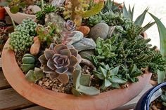 A beautiful, mixed succulent mini-garden that's flourishing, found while searching for succulent tips! ~  Succulent dish by marasri, via Flickr