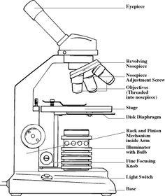 microscope wiring diagram 1997 f250 wiring diagram door microscope diagram - google search   equipment   diagram ...