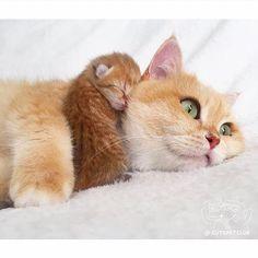 Las mejores siestas son con mamá... ❤❤❤❤❤