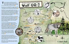 In 2012, Wolf OR-7 became the first known wild wolf to enter California in 88 years. Now a beautifully illustrated map tells his story.
