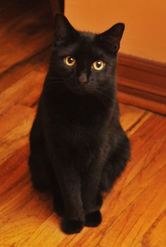 Is it supper time yet?    I LOVE BLACK CATS  .. NONE OF MY 3 ARE BLACK ... SHALL I GET ONE MORE?