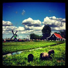 Zaanse Schans é uma vila típica holandesa perfeita para um bate e volta de…