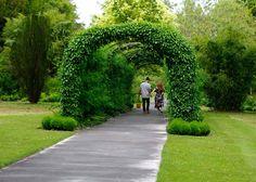 ... West Dean College - laburnum and ivy arch in the Spring Garden ...