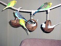 Tolle Kokosschaukel. Natur- Vogelspielzeug mit Suchtgefahr für Wellensittich &Co. im Vogelkäfig: Amazon.de: Haustier