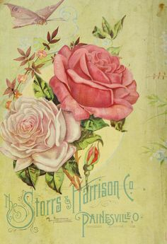 The Storrs & Harrison Co 1892 back cover:  Roses and butterfly.