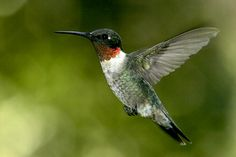 The Ruby Throated hummingbirds like to claim thier stake my feeders no matter how many@