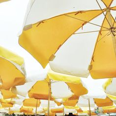 Bright yellow umbrellas