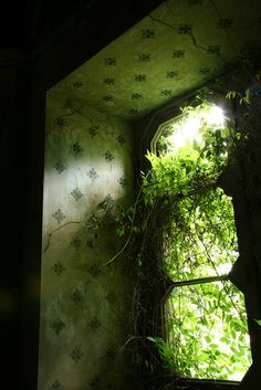 Really like the sunlight peeking through the green as nature reclaims this window.  I guess I find beauty in the weirdest things...