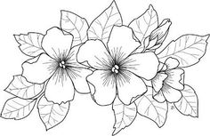 Adult coloring pages can be used as wood burning patterns! Or on hand painted silk scarves. Painting Patterns, Fabric Painting, Digi Stamps, Coloring Book Pages, Copics, Colorful Flowers, Pretty Flowers, Flower Patterns, Embroidery Patterns
