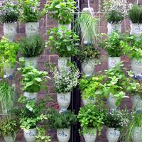 windowfarming...I have yet to try this, but looking forward to all of the possibilities!