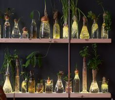 Botanical experiments by 'Spruitje' at DesignKwartier. Blogged on visualstrands.com