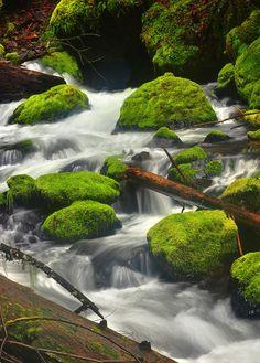 Gorton Creek - Green, Portland, Oregon.  Repinned by SeaPort Airlines, www.seaportairlines.com.