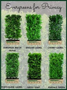 Best Privacy Hedges for Your Garden | Front Yard Landscaping Ideas with Hedges