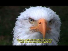 Video: Diese Rede von Donald Trump wird es so nie in den Mainstream-Medien zu sehen geben! Auch nach der US-Wahl ? - NF Deutsch